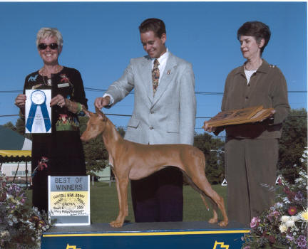 Best of Winners, PHCA Supported entry, Central NJ Hound Show 2001.
